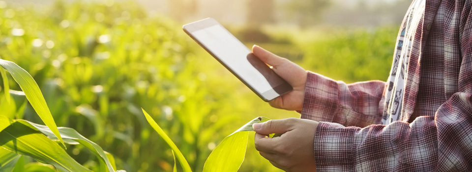 Data and Software Solutions for Farmers