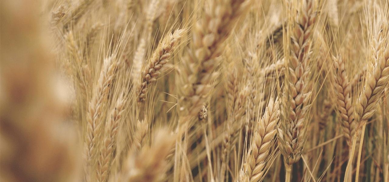 grain price index