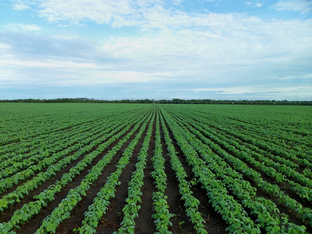 Soybeans - Brazil's Impact on Global Market Structure