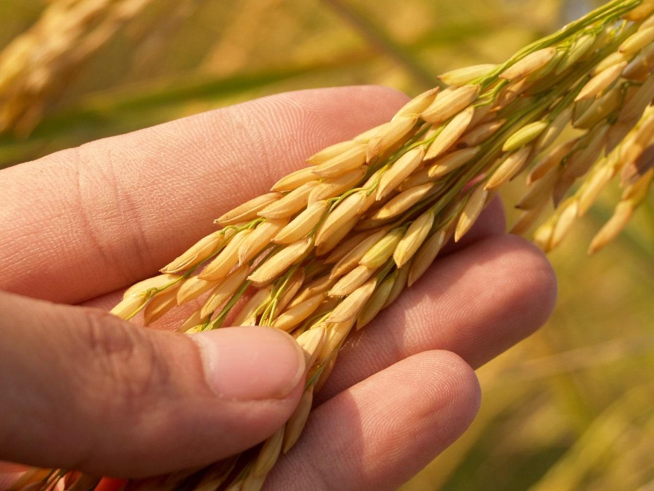 grains.com